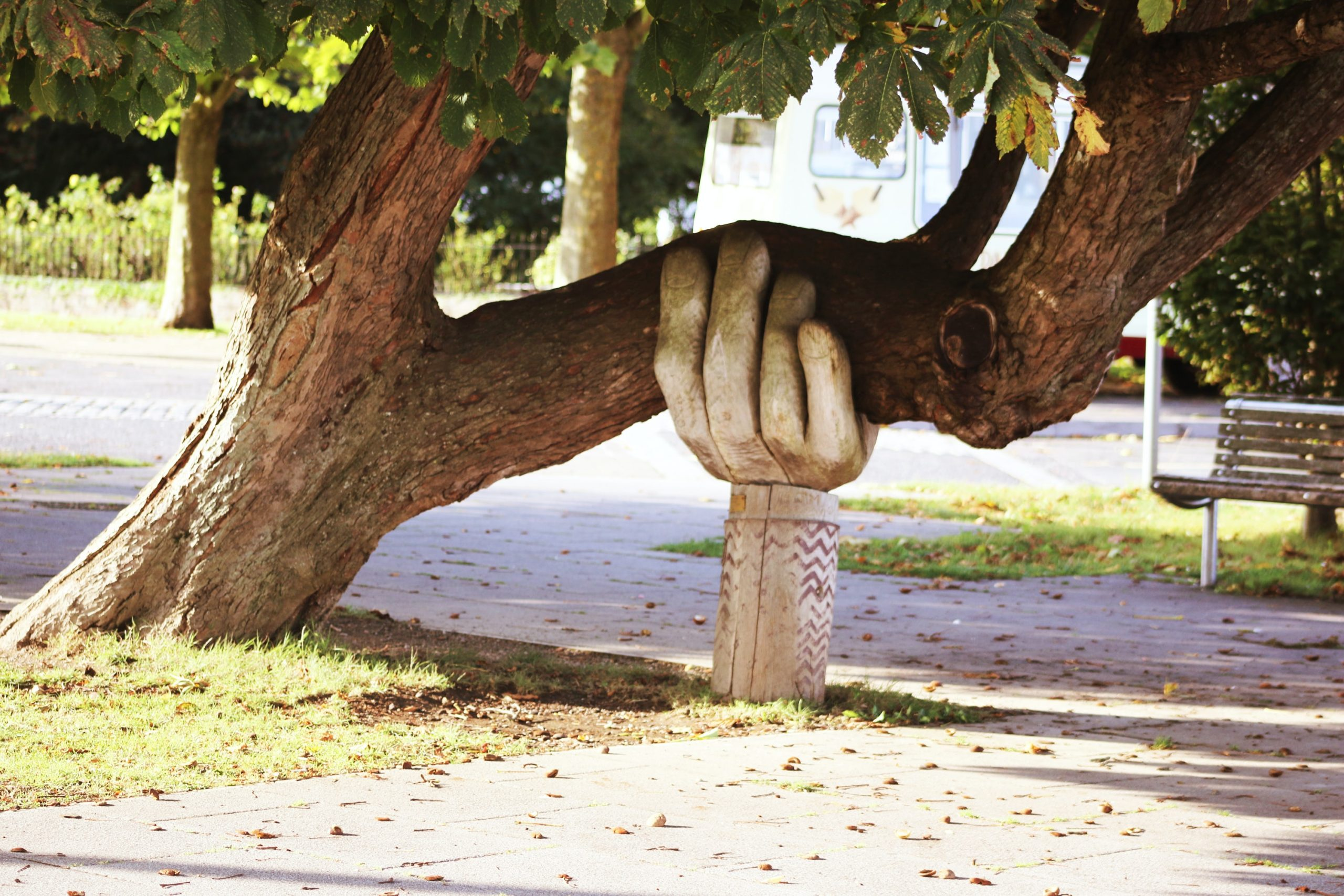 a hand supporting tree